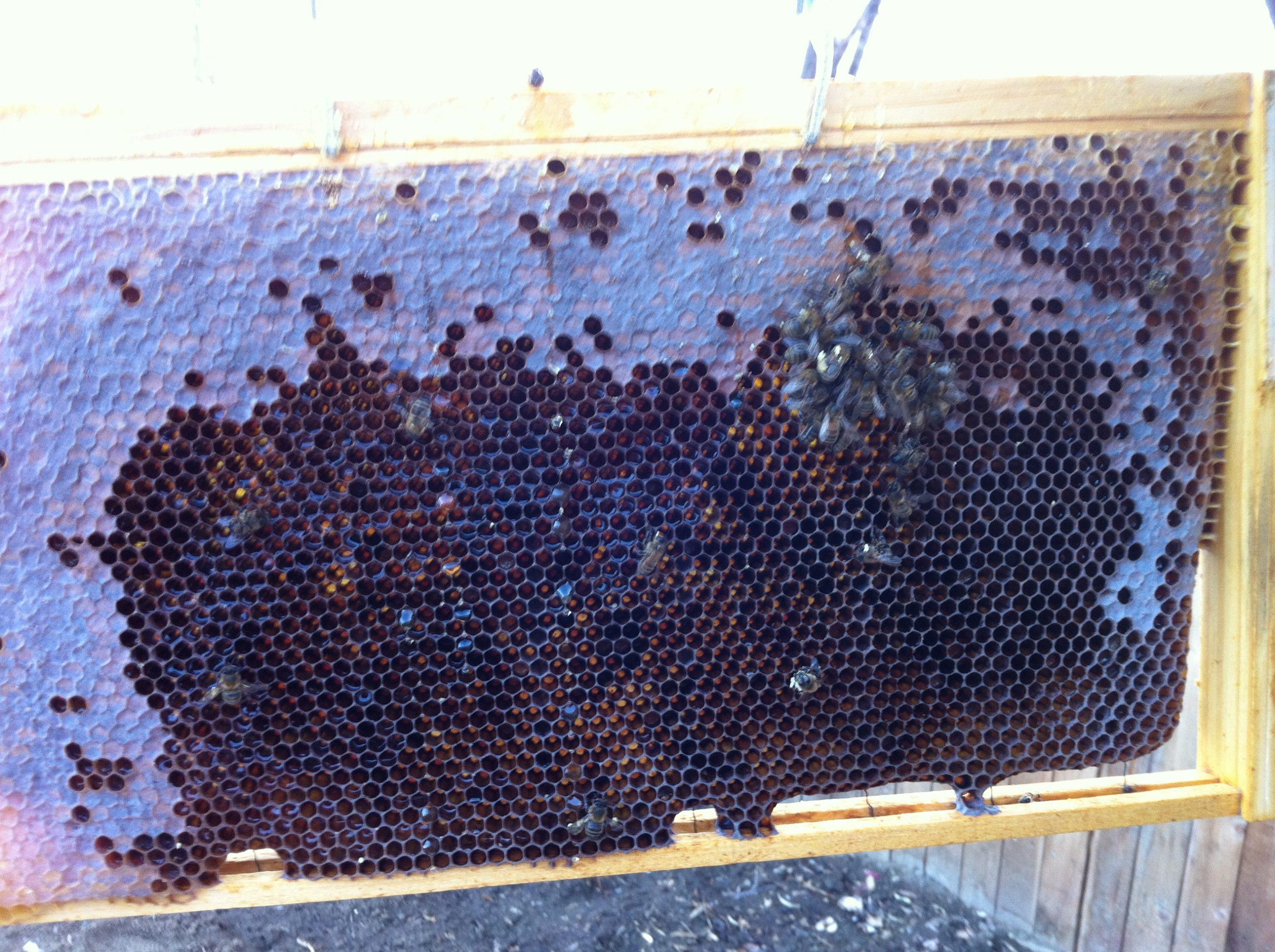 Hive Death 3